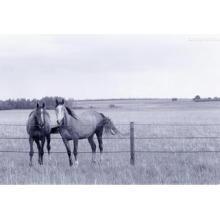 Оцинкованная Труба живыми животными металлический загон для лошади забор панелей
