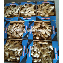 European markets hot sale Chinese air dry ginger