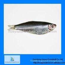 Fresh frozen seafood sardine for sale