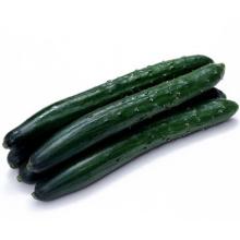 HCU11 Xiang 21 à 23cm de longueur, graines de concombre hybride F1 chinois dans les graines de légumes