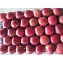 Chinesischer Apfel frisches Obst Huniu Apfel