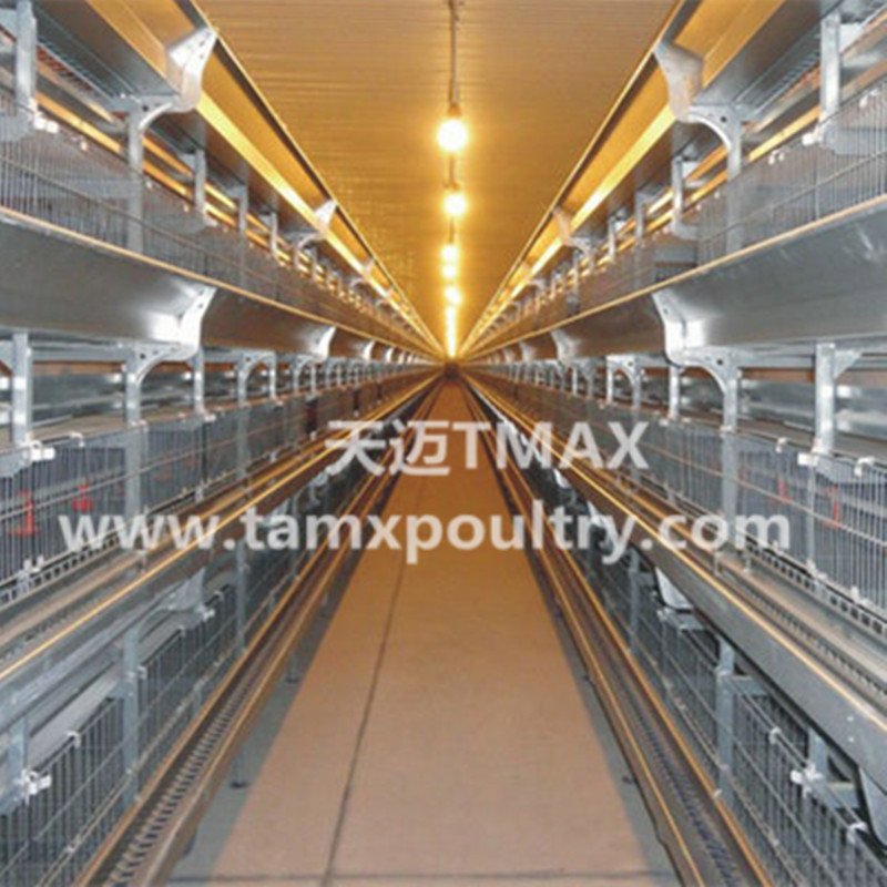 H Type Poultry Farming Equipment