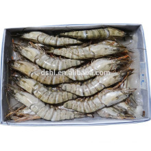 HL002 best quality largest fresh shrimp
