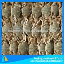 Venda promoção caranguejo de lama congelado