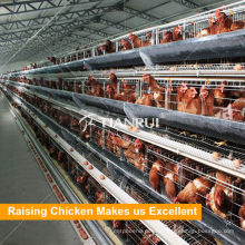 A Type Hot Selling Automatic Poultry Equipment For Layers