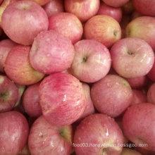 Golden Supplier of Fresh Red Qinguan Apple