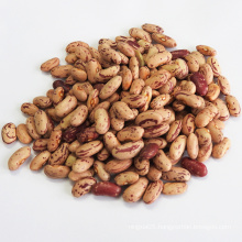 Dried Style and Bulk Packing LSKB/Light Speckled Kidney Beans