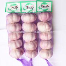 New Garlic Rate in Jinxiang, Red Garlic/Purple Garlic