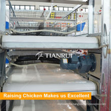 Automatic Layer Chicken Cage Manure Removal System for Poultry Equipment