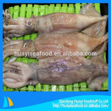 supply frozen high quality clean baby squid whole round