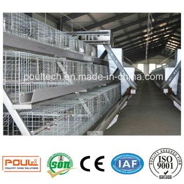 Cages et incubateurs automatiques de poulet Poul-Tech pour les élevages de volailles