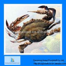 IQF crabe congelé crabe de natation bleue