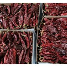 Certificación HALAL Pigmento rojo natural Paprika chiles