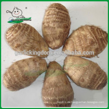 Neue frische taro / natürliche taro / neue Ernte chinesischen taro