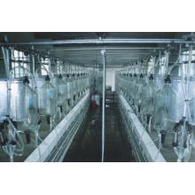 Vaca utiliza sala de ordeño de espina de pescado.