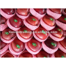 shandong fresh red delicious apple exporter