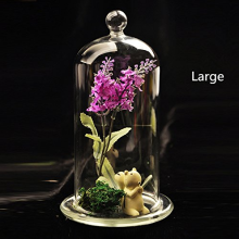Clear Glass Cloche Jar Tabletop Display Case