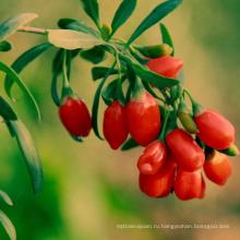 Китайский органический ягоды годжи сушеные