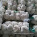 Frischer Knoblauch 1 kg Netzbeutel 10 kg Karton