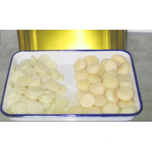 Canned Food Canned Water Chestnuts with Low Price