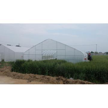 Foliengewächshaus für Gemüse