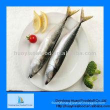 Fresh spanish mackerel