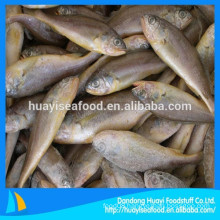 Price Of Frozen Yellow Croaker Fish