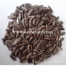 Sementes de girassol kernel de girassol