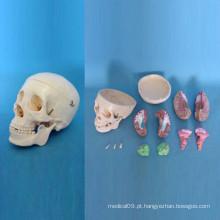 Sistema de osso humano Modelo de esqueleto de crânio anatômico (R050114)