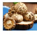 Cogumelo Shiitake de Flor de Legumes Frescos