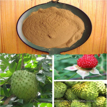 Extrait Herbal Anti-Cancer Annona Squamosa