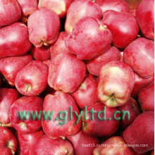 Хорошее качество Fresh Red Delicious Apple, Huaniu Apple