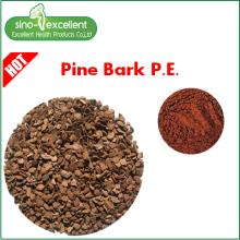 Proanthocyanidins em pó de extracto natural de casca de pinheiro