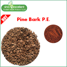 Good Quality for Extract Powder 100% pure real Pine Bark P.E. supply to United Arab Emirates Manufacturers