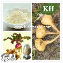 High Natural Male Sex Health Maca Extract
