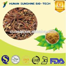 100% Natural Gambir Pflanzenextrakt 5% Alkaloide