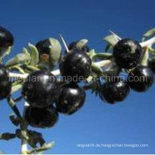 Mispel-Natur Ningxia schwarzer Wolf Berry