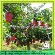 20kg Karton huaniu Apfel