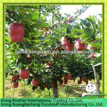 20kg carton huaniu apple