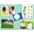 Acetamiprid + Endosulfan 20% + 30% Wp Technische 95% Endosulfan