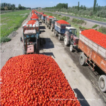 Wholesale Double Concentrated Canned Tomato Paste