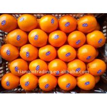 Китайский пупок оранжевый