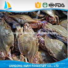 different sizes frozen wildness fresh blue swimming crab