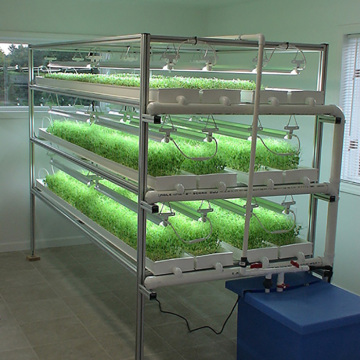 Large Scale Hydroponic Microgreen Rack