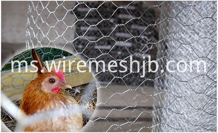Hexagonal Poultry Netting