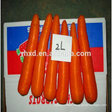 Chinese bulk fresh carrots for Malaysia