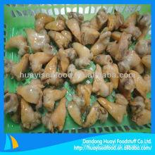 Carne de búzio congelada (Buccinum Undatum)