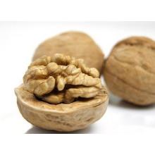 QinLing Mountain High Quality Organic Thin Shell Walnuts