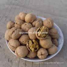 Factory Price Walnut and Walnut Kernel