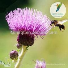 Milk Thistle Extract Powder Silybum Marianum Silymarin & Silybin